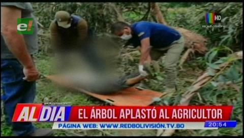 Arbol aplasta y mata a un anciano en Tiquipaya