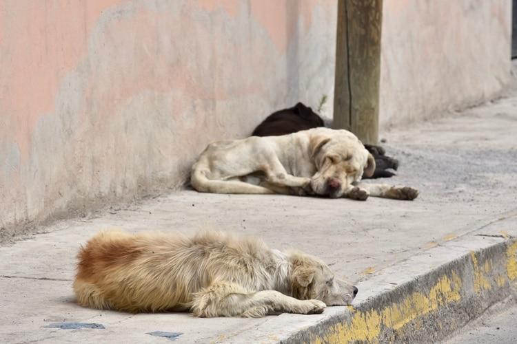 En las últimas semanas se registraron casos de maltrato animal en Zacatecas (Foto: CRISANTA ESPINOSA AGUILAR /CUARTOSCURO)