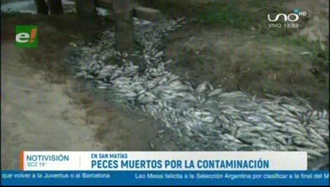 Peces en San Matías mueren por las cenizas de los incendios