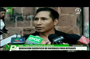 Sucre: Denuncian sacrificio de animales para rituales