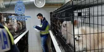 Rescatan de dos criaderos ilegales a 270 perros a los que les habían cortado sus cuerdas vocales para que no ladraran