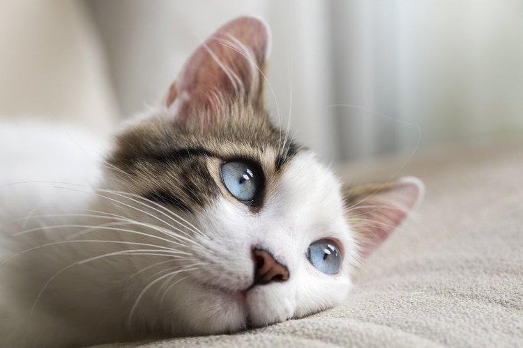 La razón por la que celebramos el Día Internacional del Gato