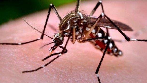 Resultado de imagen de dengue en bolivia