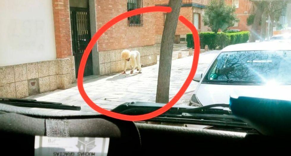 Hombre se disfraza de perro para evadir cuarentena en España. (Twitter)