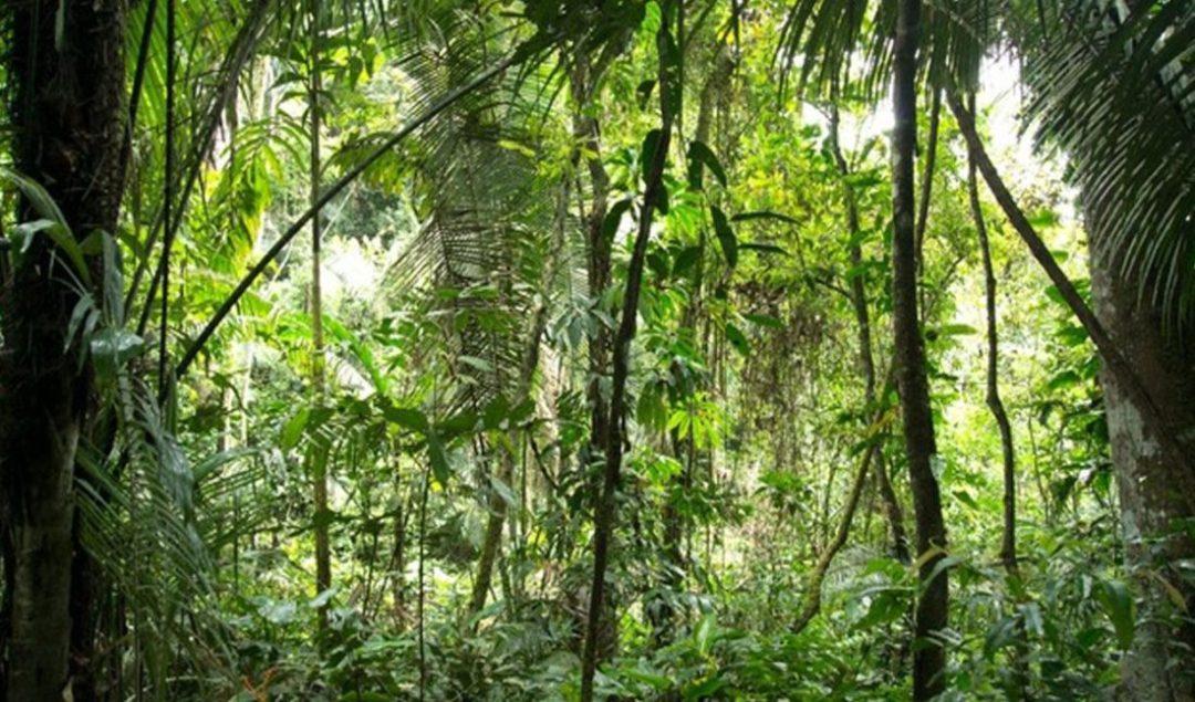 Amazonía tendrá respaldo internacional. Foto: Minam