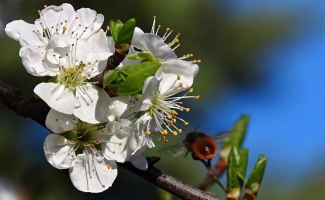 Free fotók: Tavaszi zümmögés