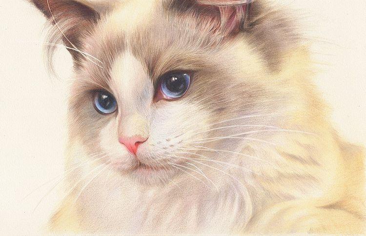價格最昂貴的5種貓。布偶貓上榜。第五種一隻售價20萬 | 尋夢寵物