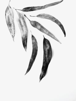liliana-eira-0AfyRdIYm38-unsplash