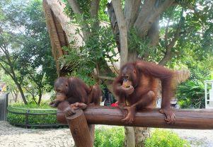 Bali Zoo 5