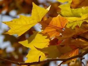 leaves-10702_1920