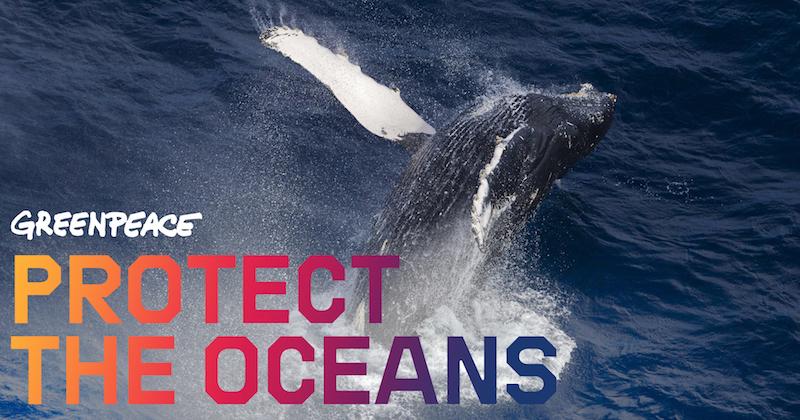 La protection des Océans chez Greenpeace