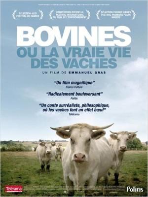 bovines.jpg