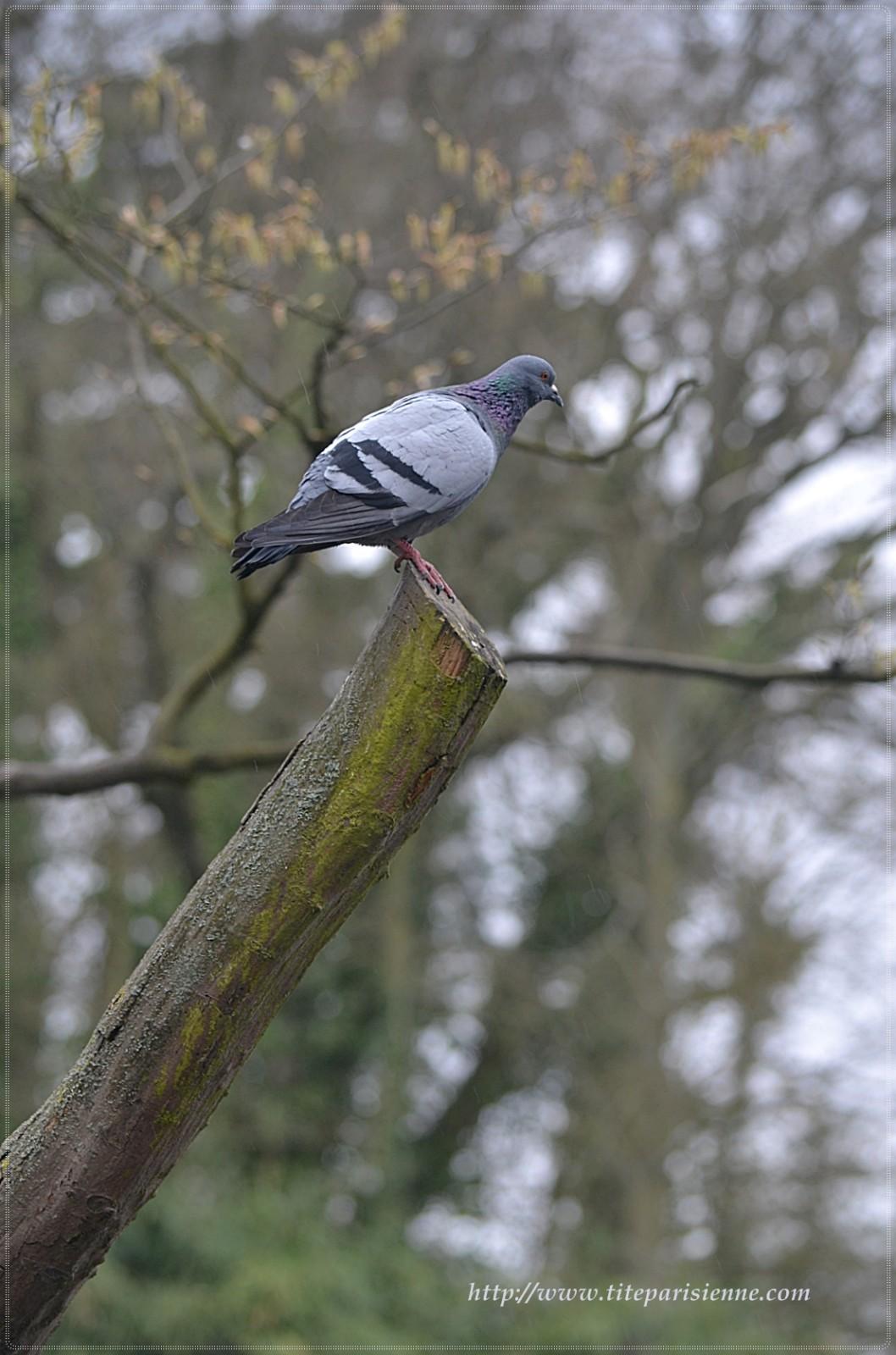 Ce Que Detestent Les Pigeons : detestent, pigeons, Faut-il, Détester, Avoir, Pigeons, Fleur, Paris