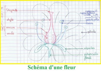 http://www.vivelessvt.com/wp-content/uploads/2008/11/sch%C3%A9ma-dune-fleur.jpg