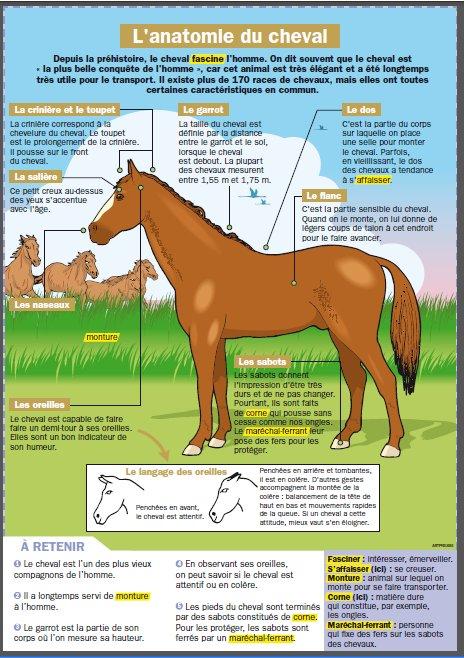 C Est Pas Sorcier Le Cheval : sorcier, cheval, Equitation:, Projet, Autour, Cheval, Maliluno