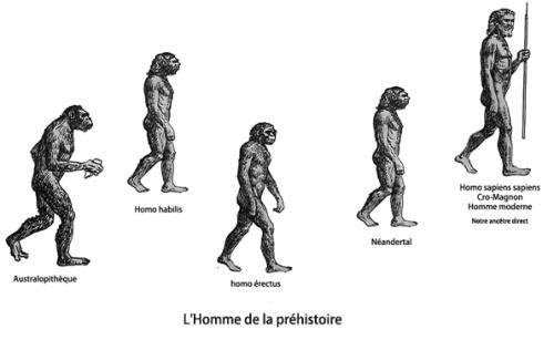 Le Triomphe de l'Homo sapiens