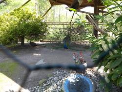 Zoo de la maison rouge Gampelen