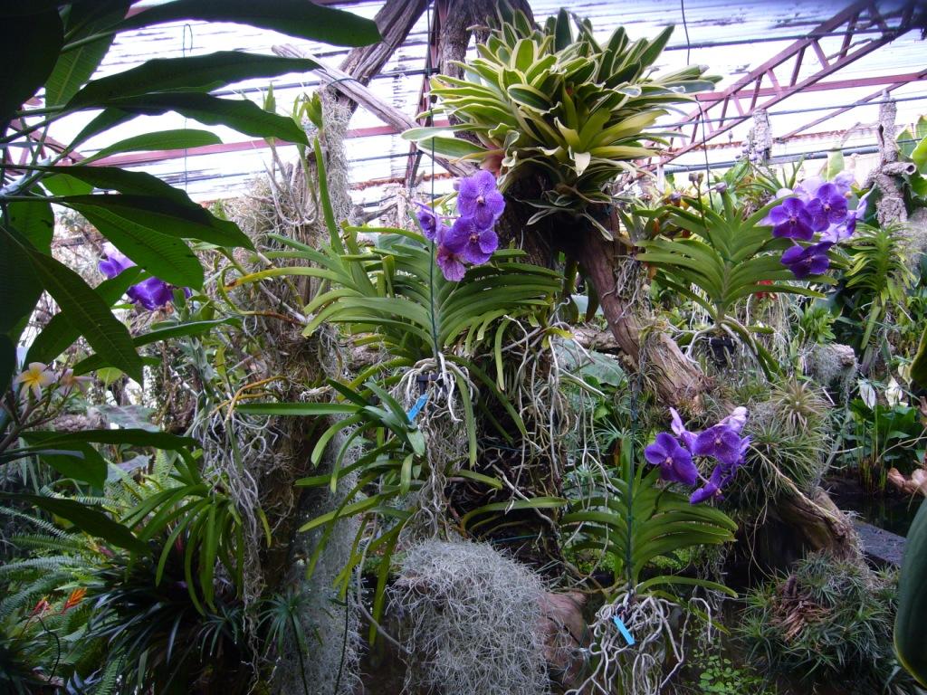 Orchides  entretien  Le Jardin de Kernvez