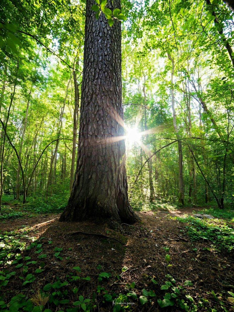 L'arbre Qui Cache La Foret : l'arbre, cache, foret, Forêt, Cache, L'arbre, était, Fois..., Nature