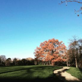 jep-eklektike-parc-montsouris-arbe