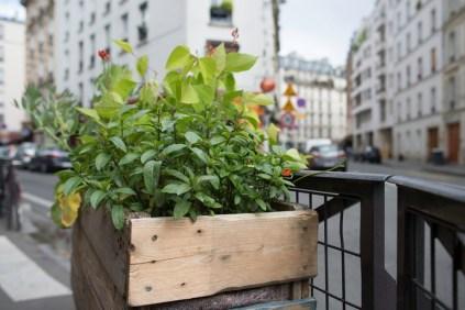 jardinière mobile rue Boulle