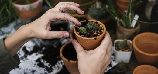 Jak żyć ekologicznie