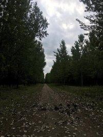 Šuma topole 2