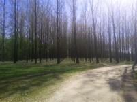 Šuma topole