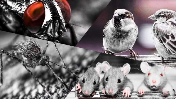 Кампања која је створила еколошку катастрофу – Four pests campaign