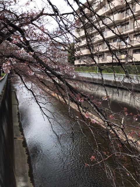 hanami_03