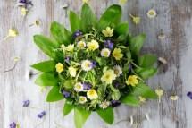 Jarní salát s medvědím česnekem, listy pampelišky, rukolou, jedlými květy a balzamikovou zálivkou.