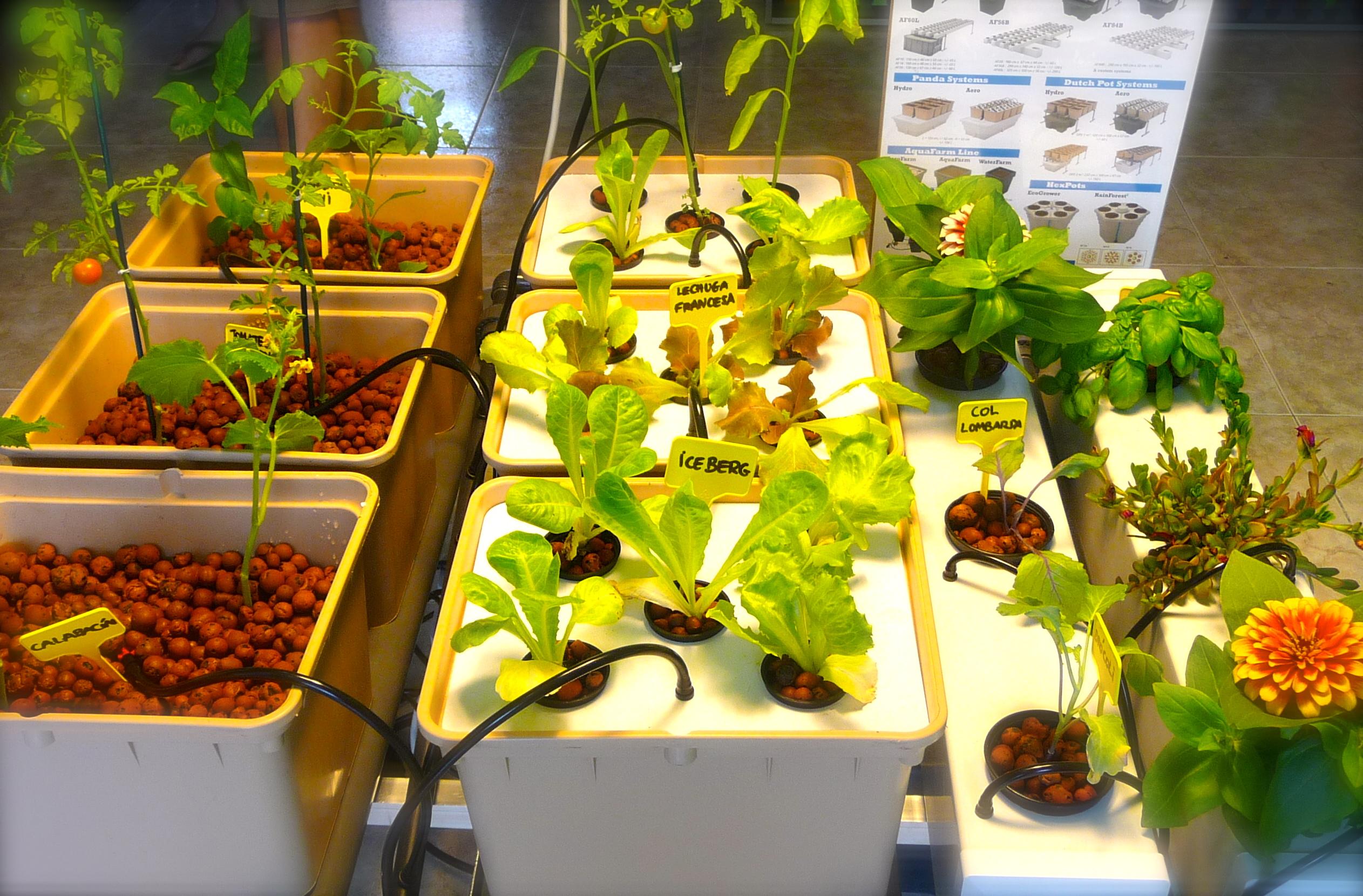 Quieres cultivar verduras en tu pisito no hay problema