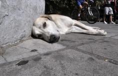 Άκουσε την απόφαση για την κλωτσιά που έριξε στον σκύλο και έμεινε άφωνος!