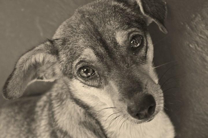 Σοκ με εν ψυχρώ δολοφονία σκύλου στο Χιλιομόδι