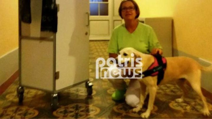 Πρώην αδέσποτο στον Πύργο έγινε σκύλος θεραπείας στην Ελβετία!