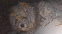 Βρέθηκε ζωντανό σκυλάκι μέσα στον φούρνο καμένου σπιτιού στο Μάτι