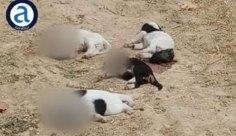 Ασύλληπτη κτηνωδία στη Ροδόπη: Αποκεφάλισαν κουτάβια και τα πέταξαν στον δρόμο