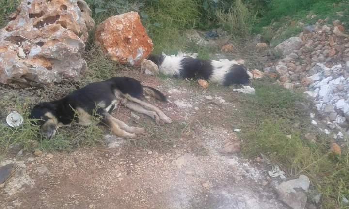 Νέκρα από φόλες 6 σκυλιά στον Κορφο