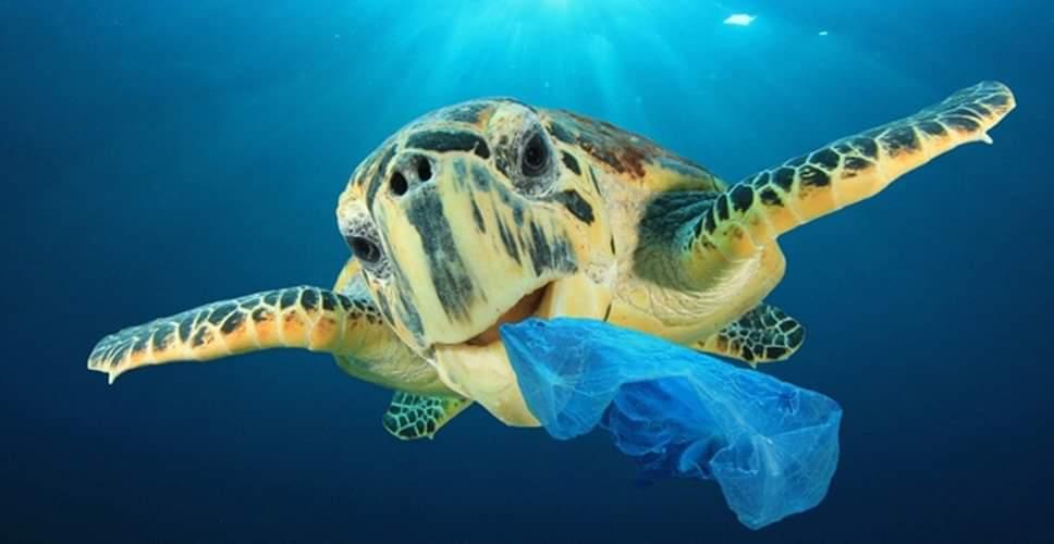 Πρωτοβουλία της ομάδας Vegan Κορινθίας για τα περιστατικά με τις νεκρές θαλάσσιες χελώνες