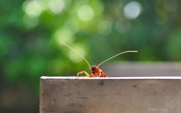 Δύο φυσικές λύσεις για να απαλλαγείτε από τις κατσαρίδες