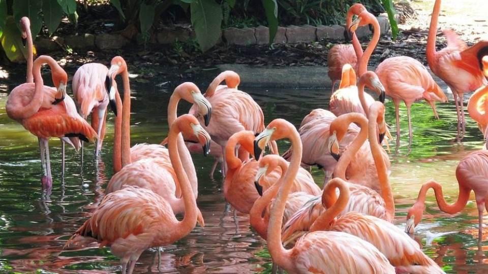 Πανέμορφα ροζ φλαμίνγκο εντυπωσίασαν στα Λουτρά Ωραίας Ελένης