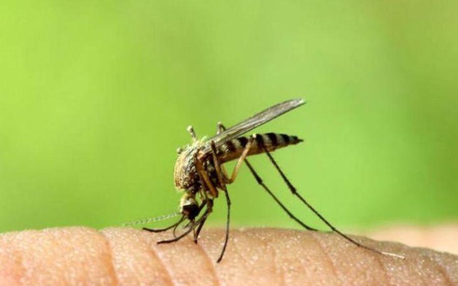 Τσίμπημα κουνουπιού: Το καλλυντικό που σταματάει τη φαγούρα