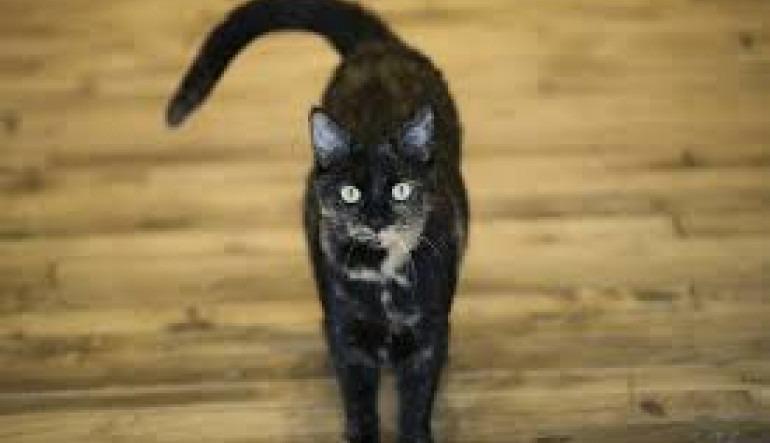 Ερευνητές εξηγούν γιατί οι γάτες αγαπούν τα πληκτρολόγια των υπολογιστών