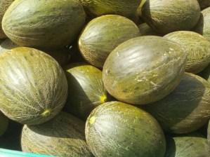 melones-ecologicos-de-ekotania