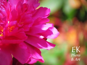 Bright Pink With Textures - Floral Photography