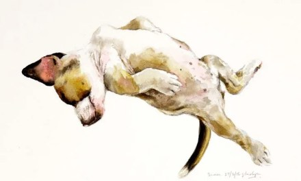 Dog lover turned canine artist paints animals in provocative positions