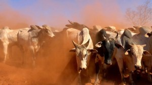 POETRY | Surging Bulls by Olee Baringtang