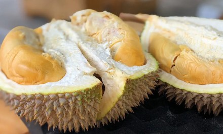 POETRY   The Durian Tree by Jayati Roy