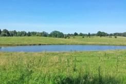 pięknie zagospodarowana działka oraz jezioro znajdujące się obok willi na sprzedaż na Mazurach