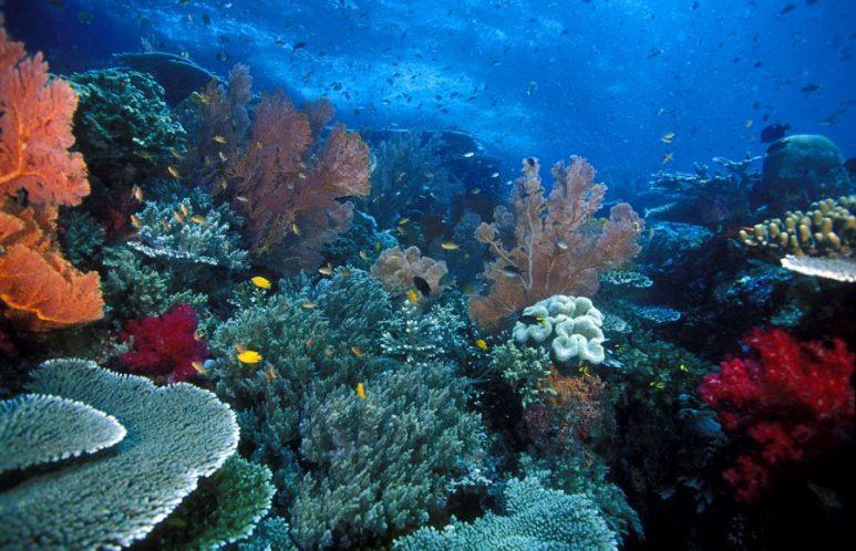 manfaat terumbu karang